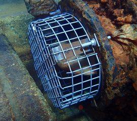Freo Dive Camera Equipment